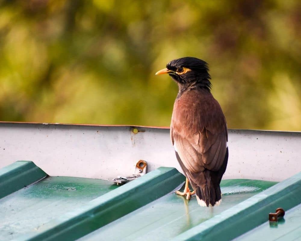 Toronto Roofing Problem # 6 – Wildlife Woes