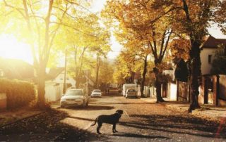 dog in a sunny street