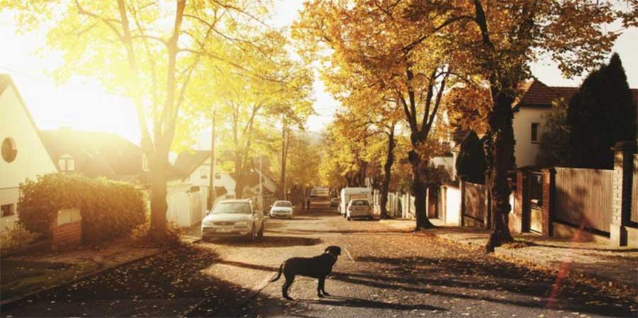 dog in a sunny street