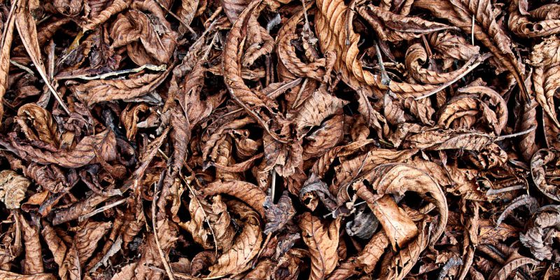 a heap of dried leaves